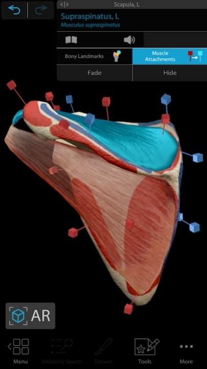 Human Anatomy Atlas 2021 читы