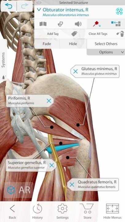 Human Anatomy Atlas 2021 скачать