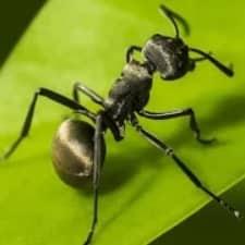 The Ants: Underground Kingdom взлом